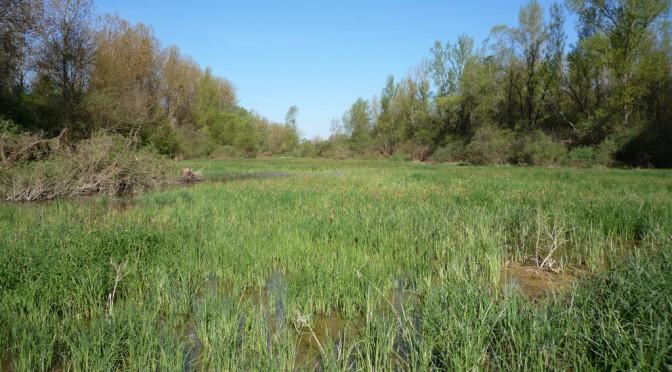 Inventaire des Zones humides» (Séance du 21 mai)