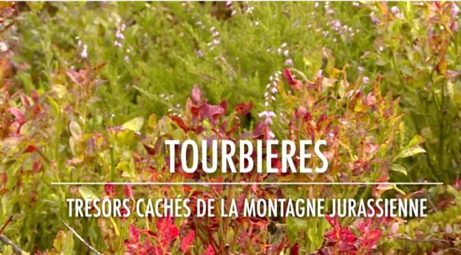 film «Tourbières, trésors cachés de la montagne jurassienne»