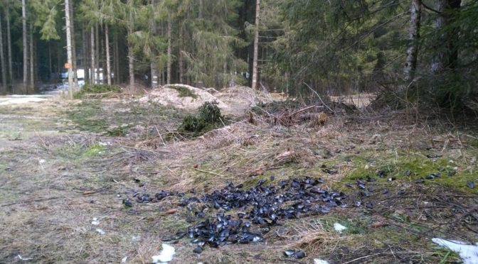Le mystère des moules de la forêt des Cornaix