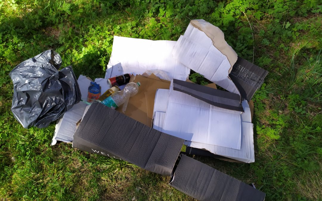 Des jeunes pousses au nettoyage de la nature !